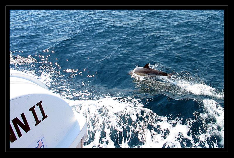 http://jpvhfr.free.fr/images/dauphin05.jpg