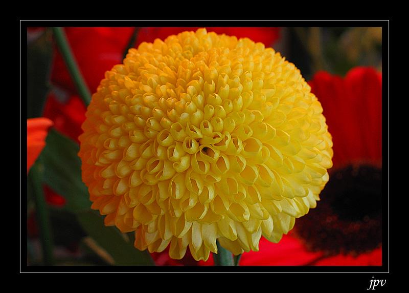 http://jpvhfr.free.fr/images/fleur_jaune.jpg