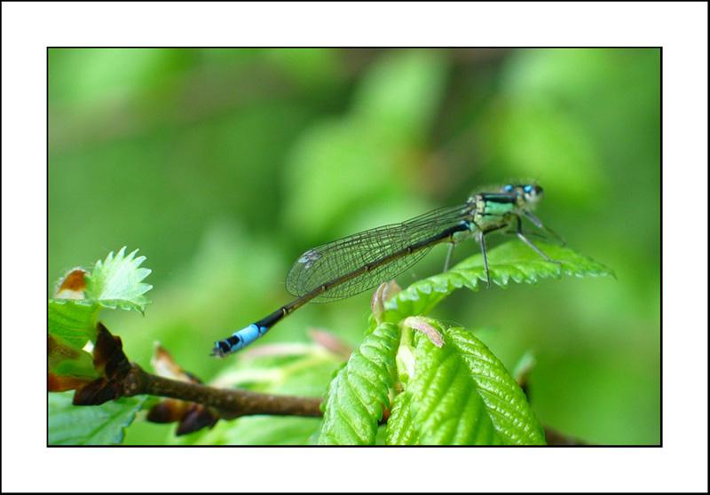 http://jpvhfr.free.fr/images/insecte01.jpg