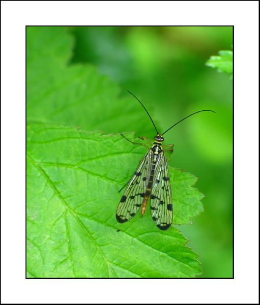 http://jpvhfr.free.fr/images/insecte02.jpg
