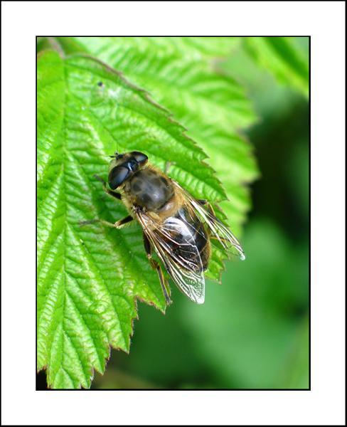 http://jpvhfr.free.fr/images/insecte03.jpg