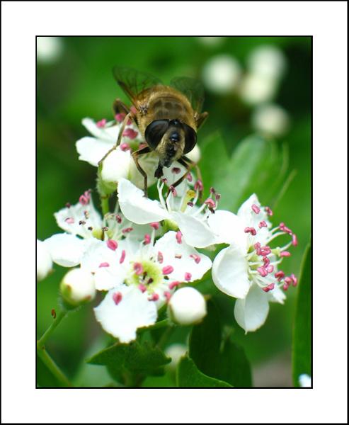 http://jpvhfr.free.fr/images/insecte04.jpg