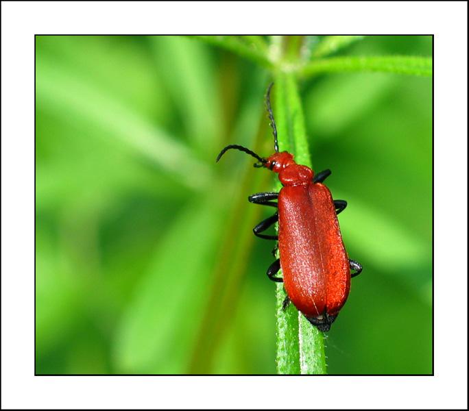 http://jpvhfr.free.fr/images/insecte05.jpg