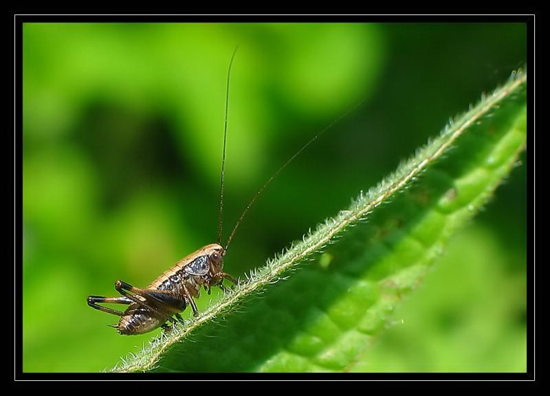 http://jpvhfr.free.fr/images/insecte09_filtered.jpg