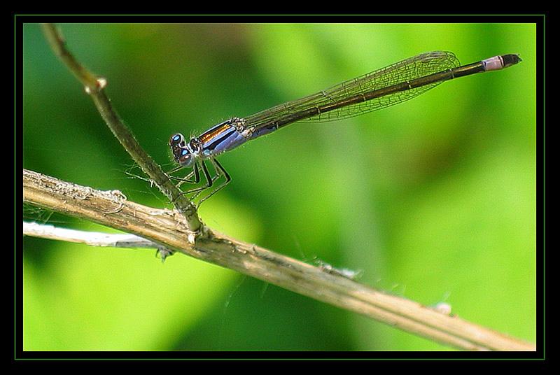 http://jpvhfr.free.fr/images/insecte13.jpg