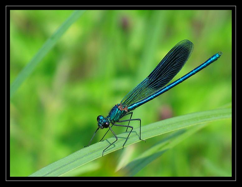 http://jpvhfr.free.fr/images/insecte21.jpg