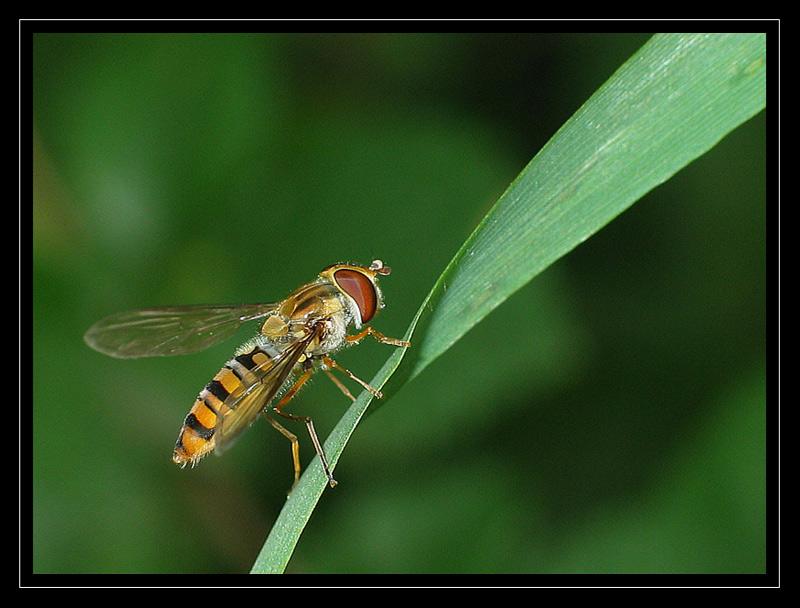 http://jpvhfr.free.fr/images/insecte23.jpg