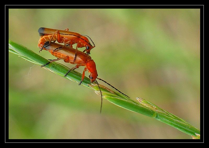 http://jpvhfr.free.fr/images/insecte35.jpg