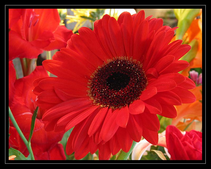 http://jpvhfr.free.fr/images/macro15.jpg
