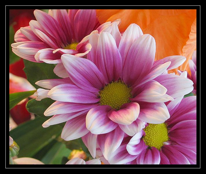 http://jpvhfr.free.fr/images/macro17.jpg